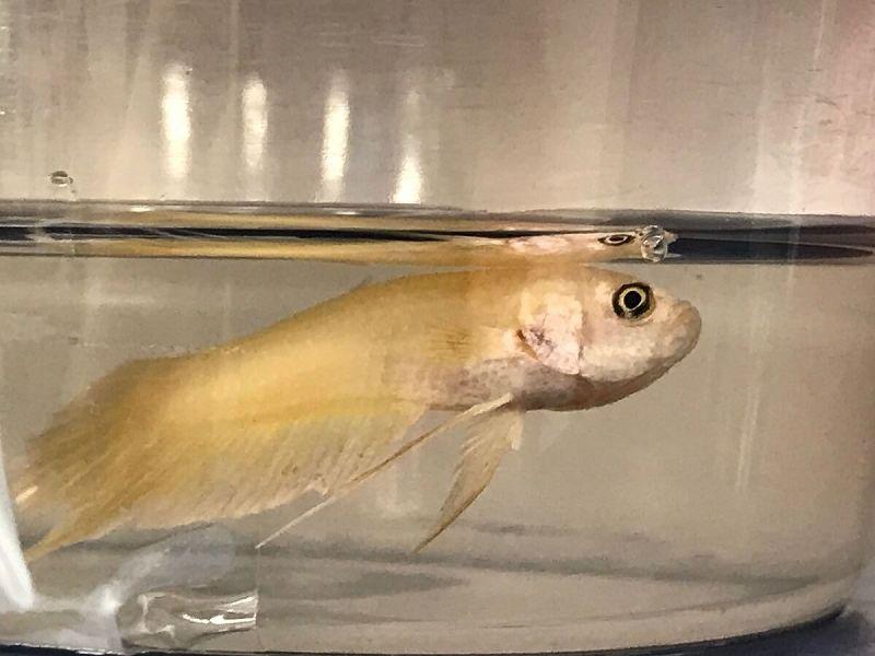 Cara Merawat Ikan Cupang Agar Tidak Mudah Mati Harga Jual Cupang