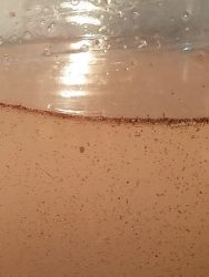 Gambar Cara Agar Artemia Tidak Cepat Mati