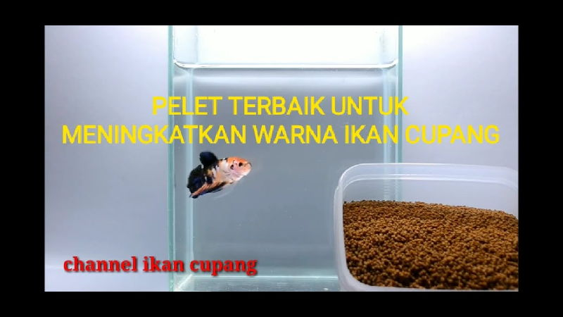 Pelet - Makanan Ikan Cupang Agar Warnanya Bagus