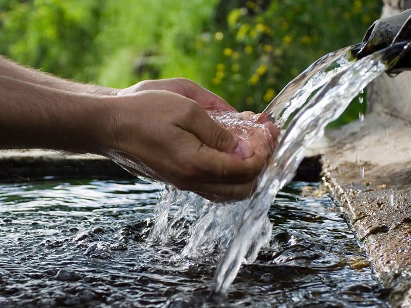 Air Untuk Ikan Cupang